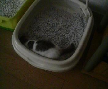 仔猫の朝は…