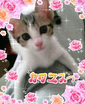 カ・・・カワユスギ(<br />  爆)