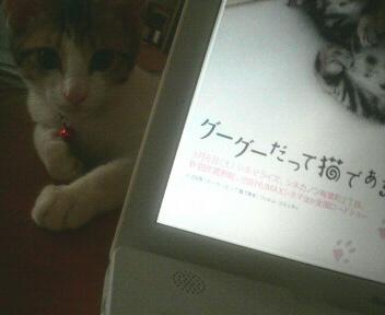 しつけって難しい〜(^_^;)