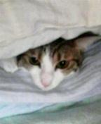 ミルフィーユ猫