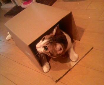 ダウニーの箱とこはるさん(<br />  笑)